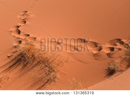 Footsteps in the sand, The Sahara, Merzouga, Morocco