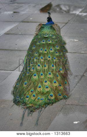 Bird 52