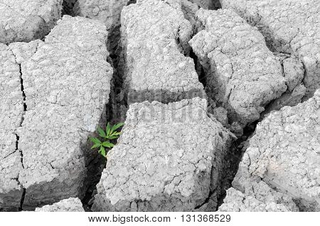 plant with green leaves growing between cracked earth, arid area