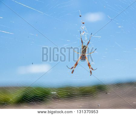 Golden orb weaving spider suspended on a wheel shaped web with black body and banded white and brownish orange legs white a blurred blue sky background and rolling hills.