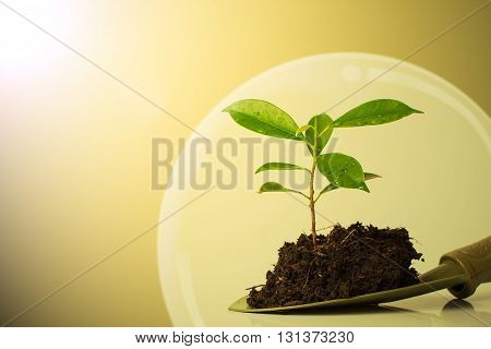 Small plant and soil in spade with lighting and lens flare effect. Safe tree concept