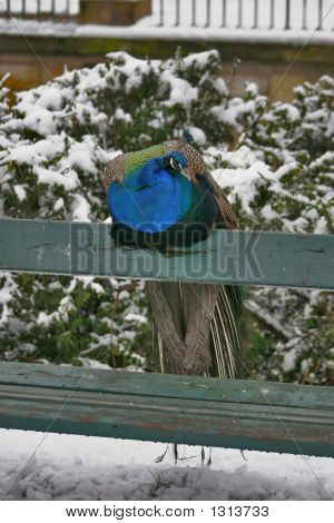Bird 54