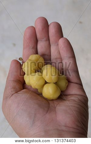 group of star gooseberry is the Thai native fruit