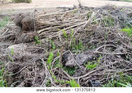 deforested cut tree wood in nature garden