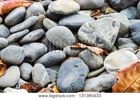 Autumn , Pebble stones with dry leaf