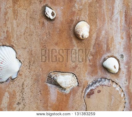 shellfish and shells to decorate on cement wall.
