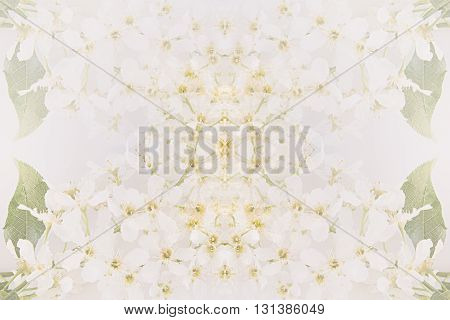 Floral abstract background. The pattern of bird cherry flowers. Bright gentle background.