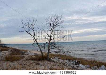 lake Michigan shore with tree and rocks.