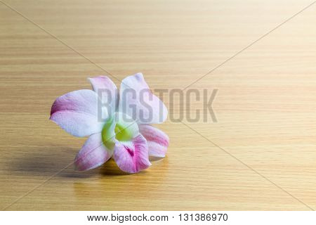 Pink dendrobium orchid flower on wooden panel