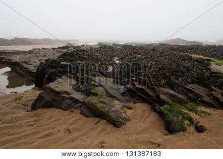 Rocks On The Shore With Sea Mist In The Background