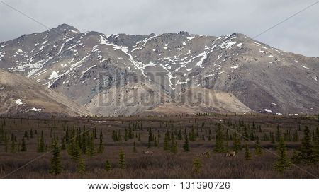 Snow-dusted mountains in Alaska's Denali National Park