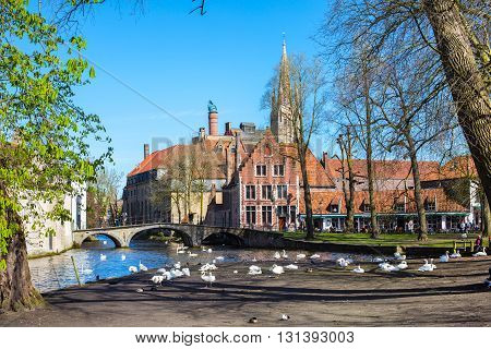 Bruges, Belgium - April 10, 2016: Canal and bridge view, white swans, colorful spring trees and church tower in popular belgian destination