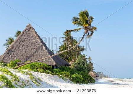 thatched bungalows on the white sandy beach on the ocean, surrounded by grass trees against the blue sky on the island of Zanzibar
