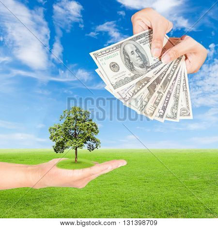 Carbon credits concepthand holding tree and US Dollars banknote against green field and blue sky background