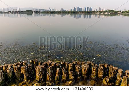 Panorama of the city from the shore stumps rocks and seaweed. City view from the shore. View from the beach on town a reflection of the city calm water