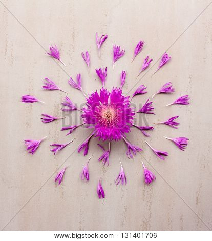 flower cornflower purple - purple with petals laid out on cream-colored background. Flat lay top view