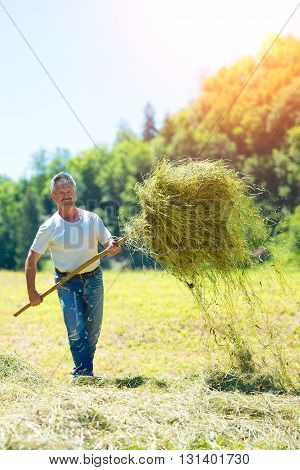 Man Farmer Turns The Hay With A  Fork