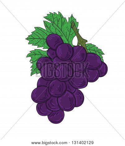 Vector art fresh grape on white background.