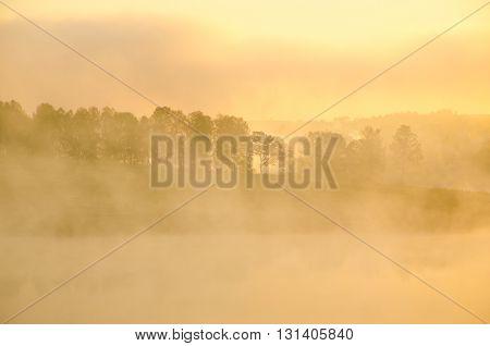 Morning fog over the lake around grow birch trees.