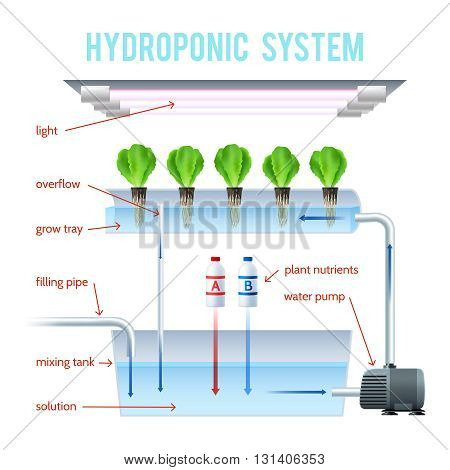 Hydroponics Colored Infographic method of growing plants on artificial environments without soil and explain how vector illustration