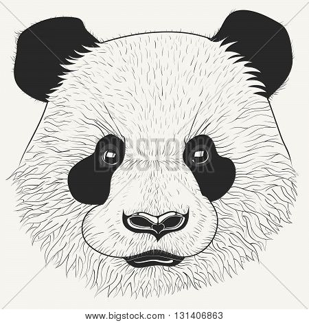 Hand drawn head of cute young panda bear. Modern animal portrait with detailed fur. Perfect for print posters t-shirts and textiles. Vector illustration.