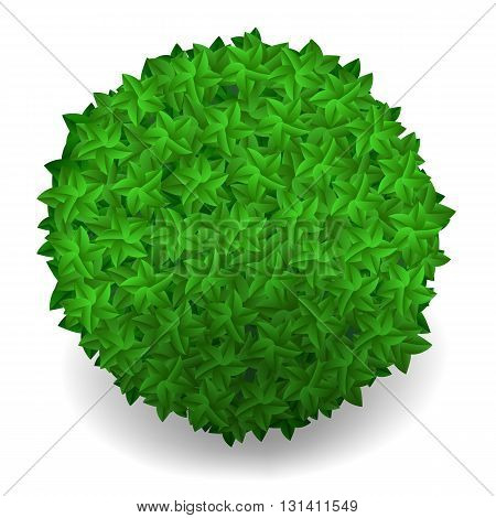 Green Leaves Round Isolated on White Background