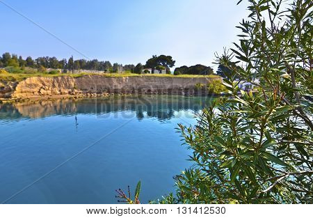 close up of olive tree and blur landscape of Corinth canal Greece