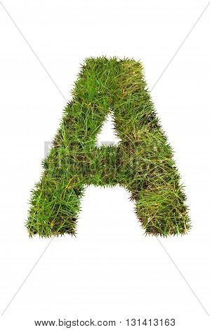 fresh green grass letter on white background - A