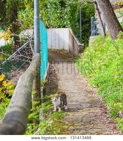 Cat on a street in the village of gazing warily forward.