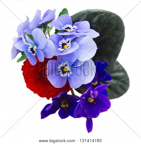 Posy of fresh violets, pansies and ranunculus isolated on white background