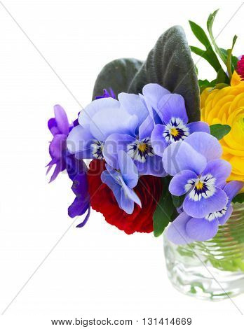 Posy of fresh pansies, daisies and ranunculus close up isolated on white background