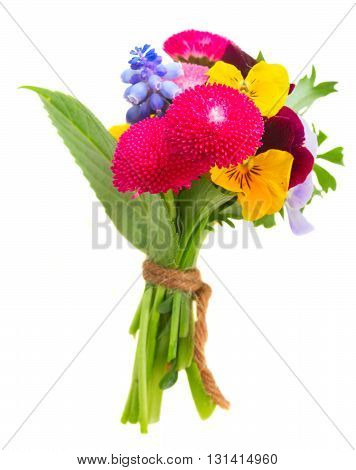 Posy of fresh pansies, daisies isolated on white background
