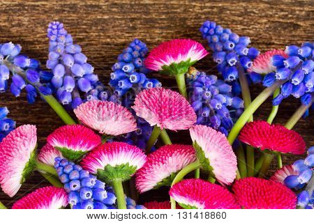 Pile of fresh Muscari and Daisy Flowers close up