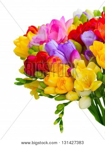 Fresh freesia flowers and buds posy close up isolated on white background