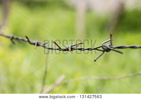 Closeup of barbed wire over nature background.