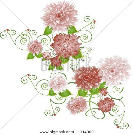 Burgandycarnations Copy