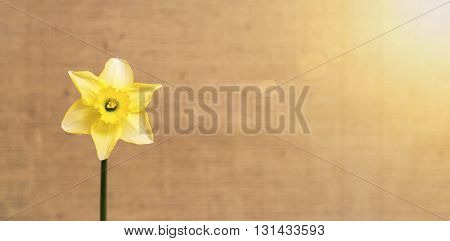 Spring flower greeting card with copy space
