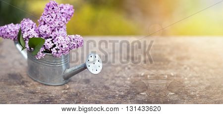 Beautiful lilac flower bouquet in spring - website banner