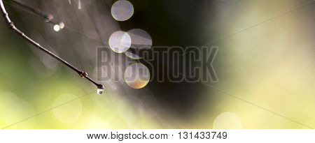 Simply abstract nature background of dewdrop and lights