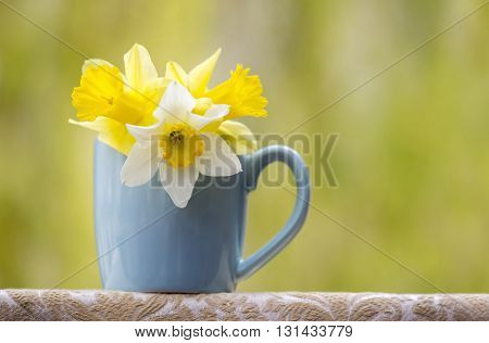 Banner of beautiful yellow and white Easter flowers in a blue cup