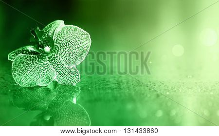 Beautiful single orchid flower background with copy space