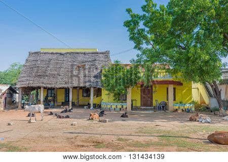 Chettinad India - October 16 2013: Yard in front of farm near Kadiapatti village. Cattle goats people in front of yellow buildings and straw roof.