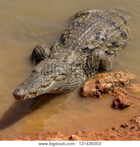 Aligators waiting in the hot African sun on the waters edge.