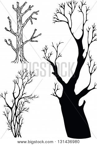 naked trees without leaves, black and white illustration