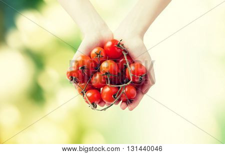 healthy eating, dieting, vegetarian food and people concept - close up of woman hands holding ripe cherry tomatoes bunch over green natural background