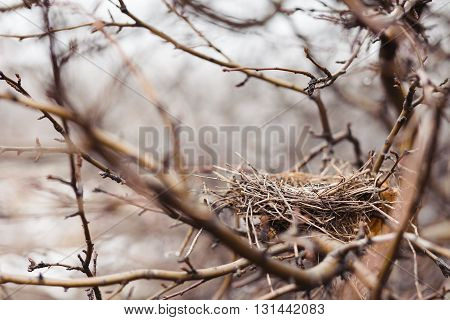 The nest left by birds in an autumn garden.