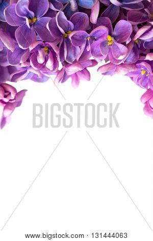 Vertical beautiful floral border with lilac isolated on white. With copy-space.