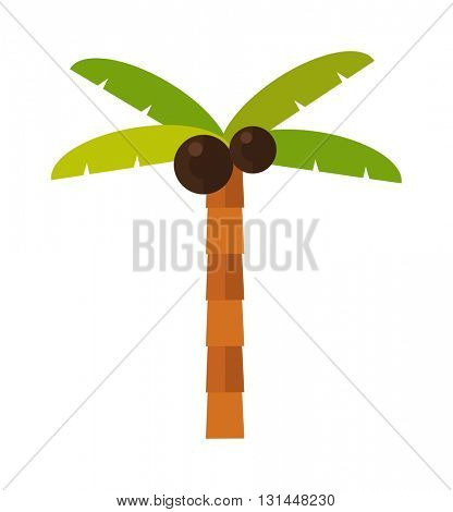 Palm isolated vector.