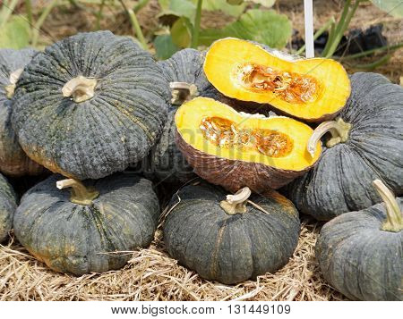 bulk of tropical pumpkins and their cross section