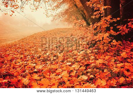 Foggy autumn landscape. Autumn park with red fallen maple leaves on the foreground. Soft and creative filter processing